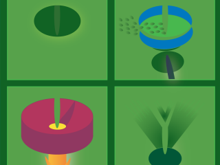 Botany by Nick Lethert